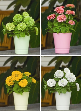 burpee colorfusion blooming containers