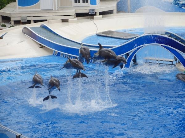 SeaWorld, Orlando, Florida