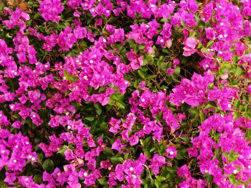 P1000075mAY FLOWERS_1